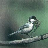 目黒区のシンボル(紋章、木・花・鳥)